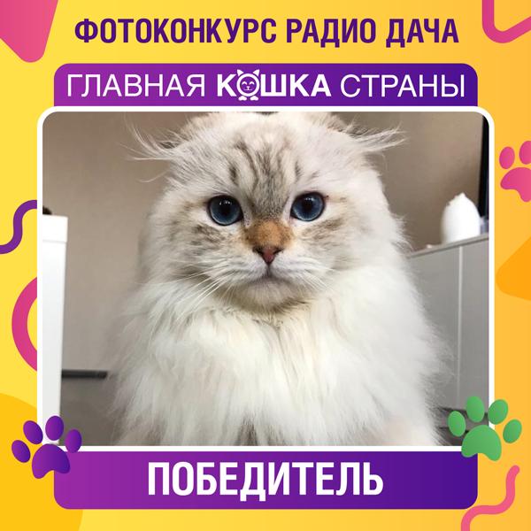 Главная кошка страны