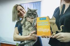 Главная кошка Барнаула