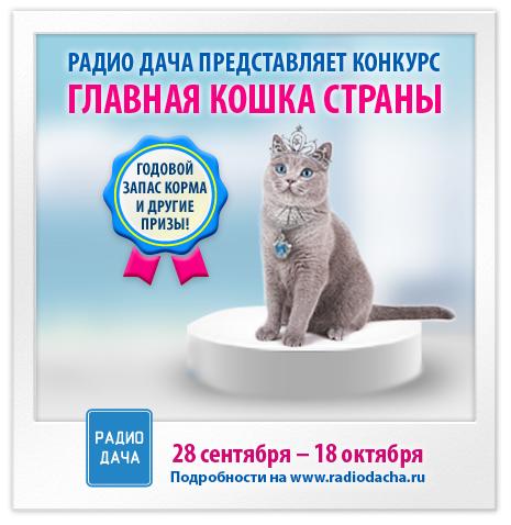 Конкурс котов на нашем радио