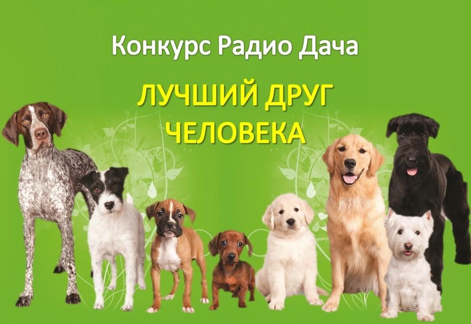 Все о собаках конкурсы